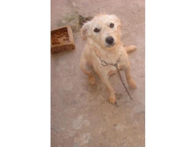 DoaCão: Cachorro Vacinado