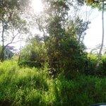 Terreno a Venda Próximo ao Jaceguava