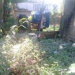 Terreno no jardim castelinho